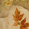 Still life of leaves and flowers