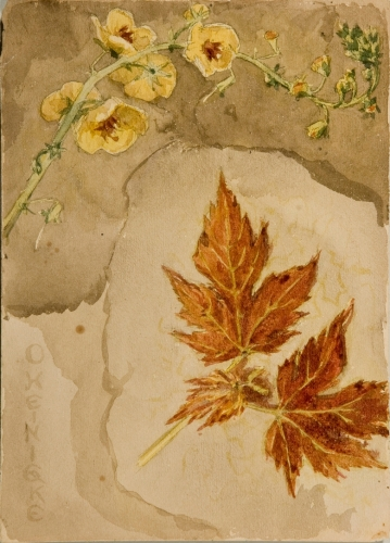 Maple Leaves and Yellow Flowers